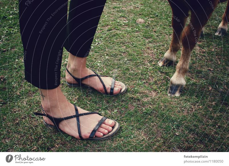 toes_look Ride Feet Meadow Ground Horse Hoof Stand Together Agreed Love of animals Unwavering Friendship Considerate steady Side by side man and horse Pony Toes