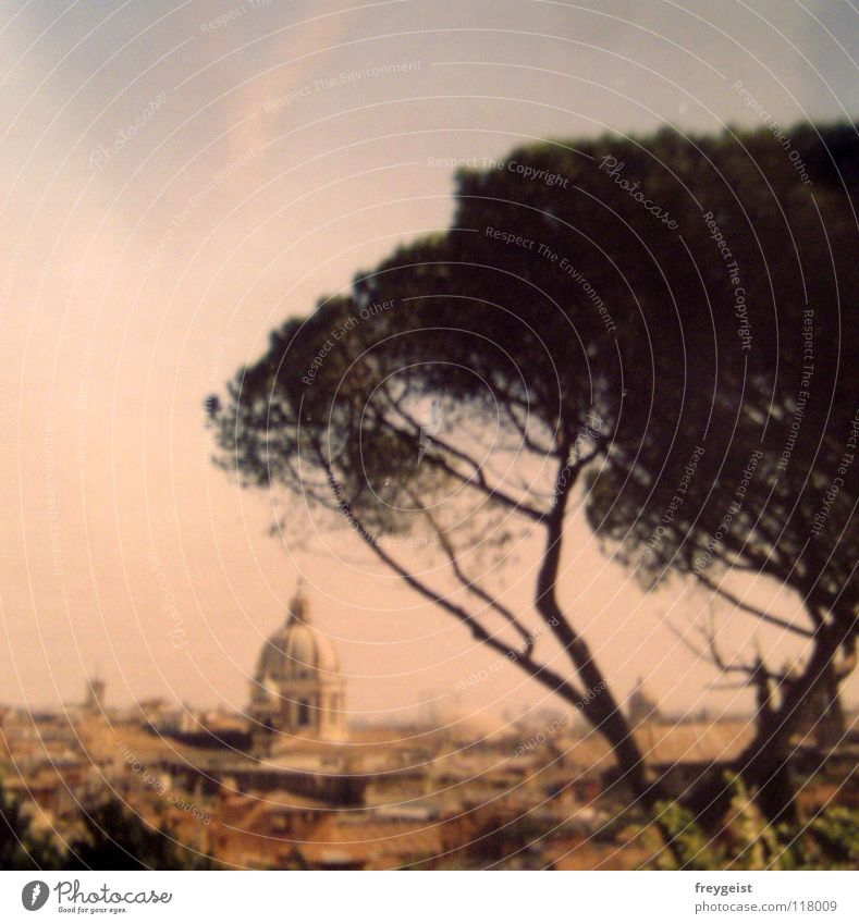 Tree City Vacation & Travel Warmth Art Europe Culture Italy Physics Hot Americas Past Historic Dome Rome Domed roof