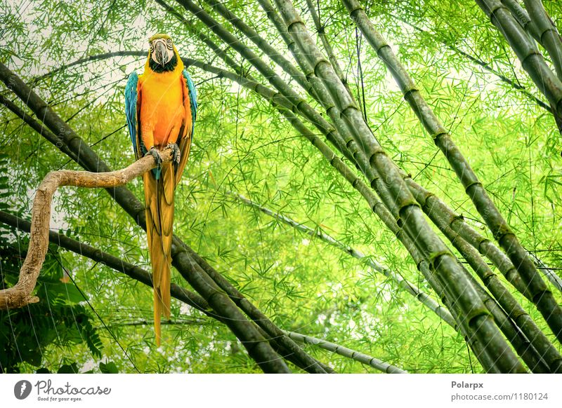 Parrot in a rain forest Nature Blue Beautiful Green Colour Animal Yellow Life Natural Bird Bright Wild Feather Cute Pet Exotic