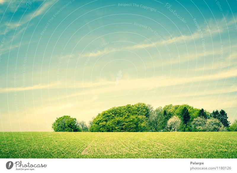 Green landscape Sky Nature Blue Plant Beautiful Colour Summer Sun Tree Landscape Clouds Forest Environment Spring Meadow