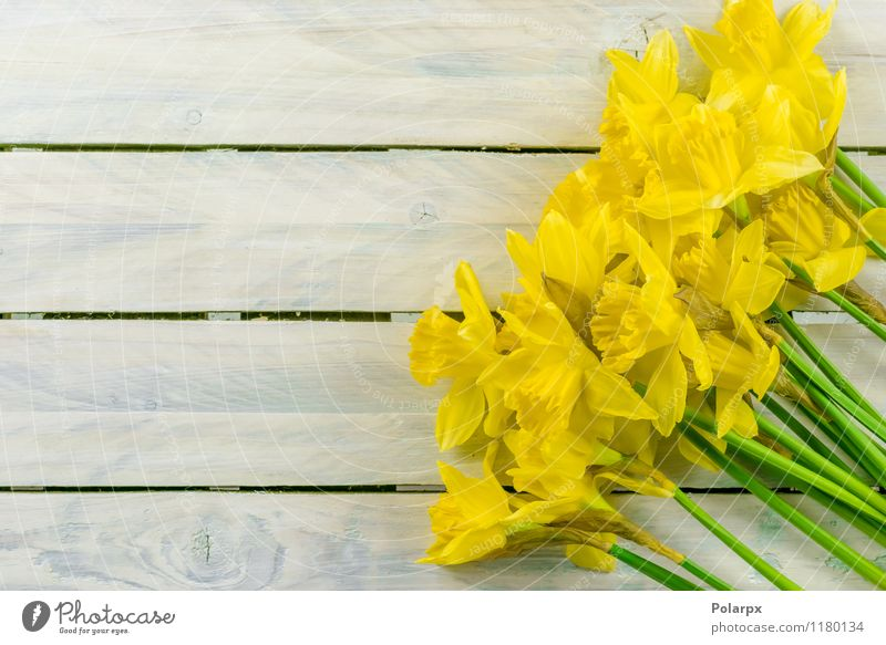 Daffodils on a table Design Beautiful Garden Decoration Easter Gardening Nature Plant Spring Flower Leaf Blossom Bouquet Growth Fresh Natural Yellow Green White