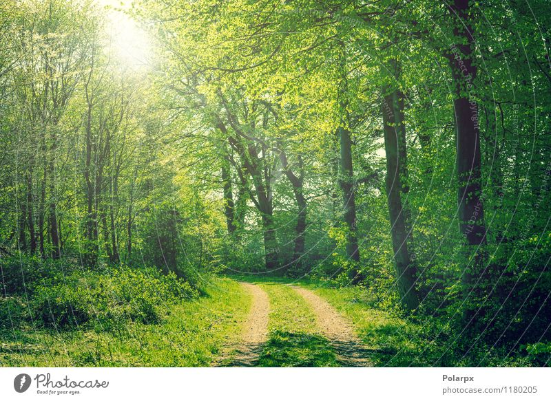 Forest in the spring Beautiful Summer Sun Environment Nature Landscape Plant Spring Autumn Tree Leaf Park Street Lanes & trails Bright Natural Green Colour way