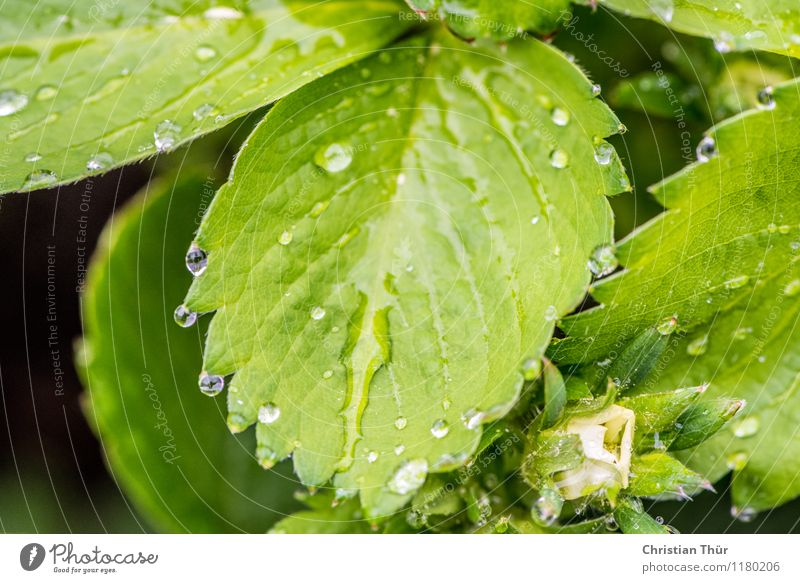 Nature Plant Summer Water Relaxation Leaf Calm Animal Environment Life Meadow Healthy Garden Health care Rain Contentment