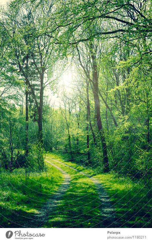 Green forest Beautiful Summer Sun Environment Nature Landscape Plant Spring Autumn Tree Leaf Park Forest Street Lanes & trails Bright Natural Colour way Beech