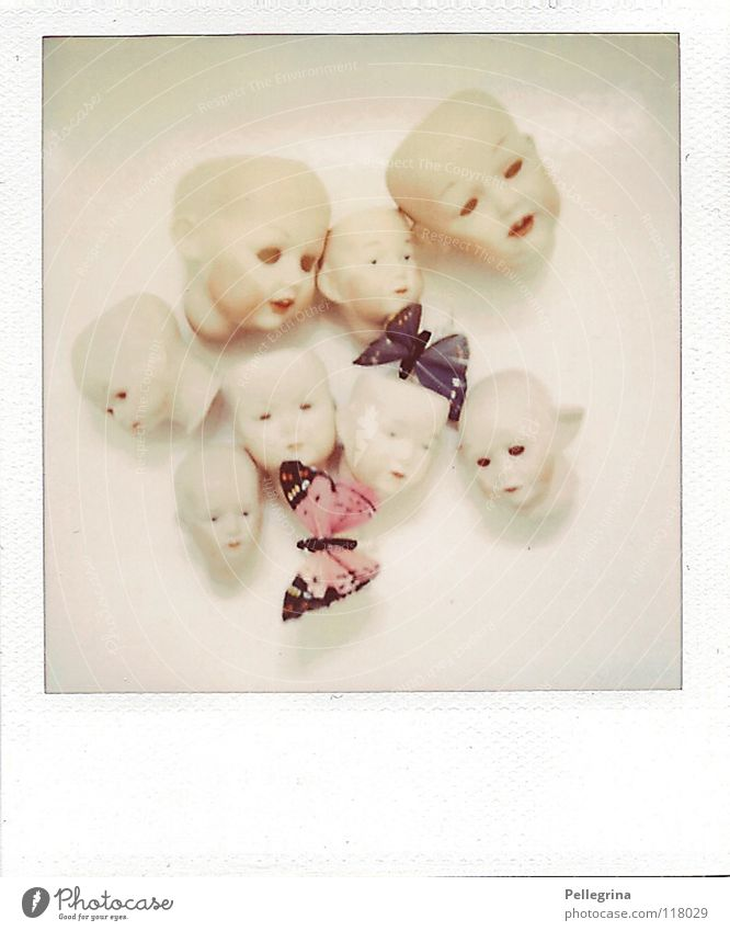 Old Blue Loneliness Head Pink Flying Film Polaroid Broken Wing Creepy Butterfly Crockery Obscure Doll