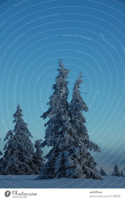 Ä Small fir II Black Forest Kandel Fir tree Winter Snowscape Cold Peak Clouds Far-off places Idyll Infinity Snow hiking Cross-country ski trail pine