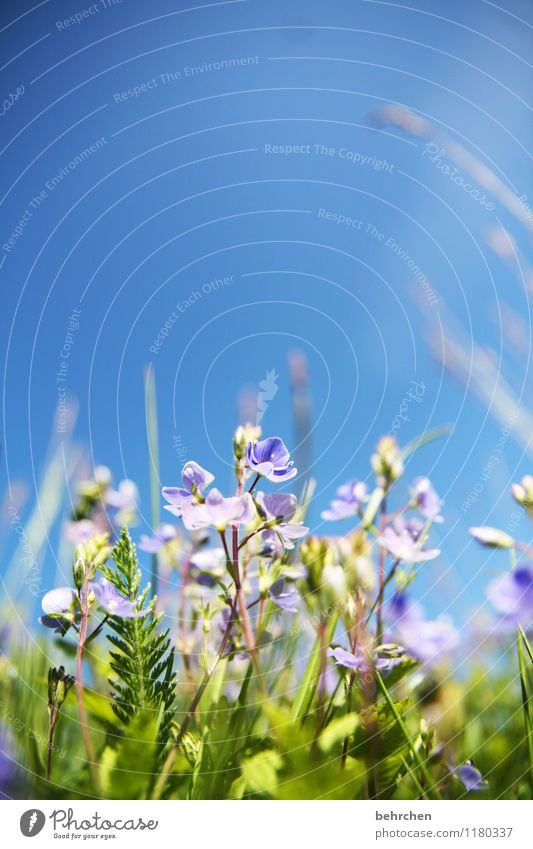 Sky Nature Plant Blue Summer Beautiful Flower Leaf Warmth Blossom Meadow Grass Small Garden Park Field