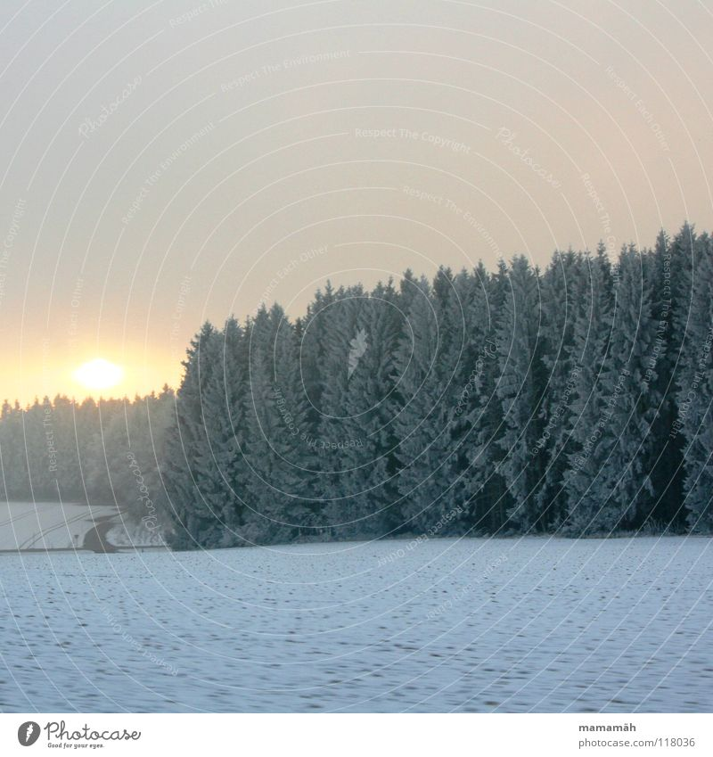 winter atmosphere Bad weather Clouds Field Sunset Tree Forest White Winter soft hail Lanes & trails Snow