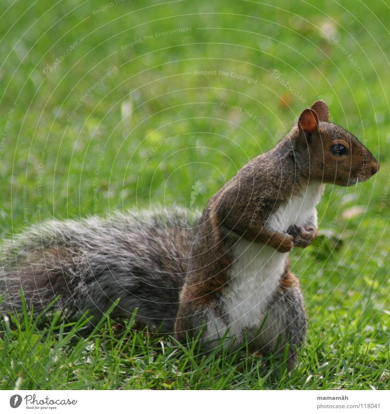 Favourite animal: squirrel! Part 2 Squirrel Paw Bushy Sweet Small Cute Tree Meadow Grass Toronto Park Speed Brown Pelt Rodent Mammal Be confident Brash Ear Nose