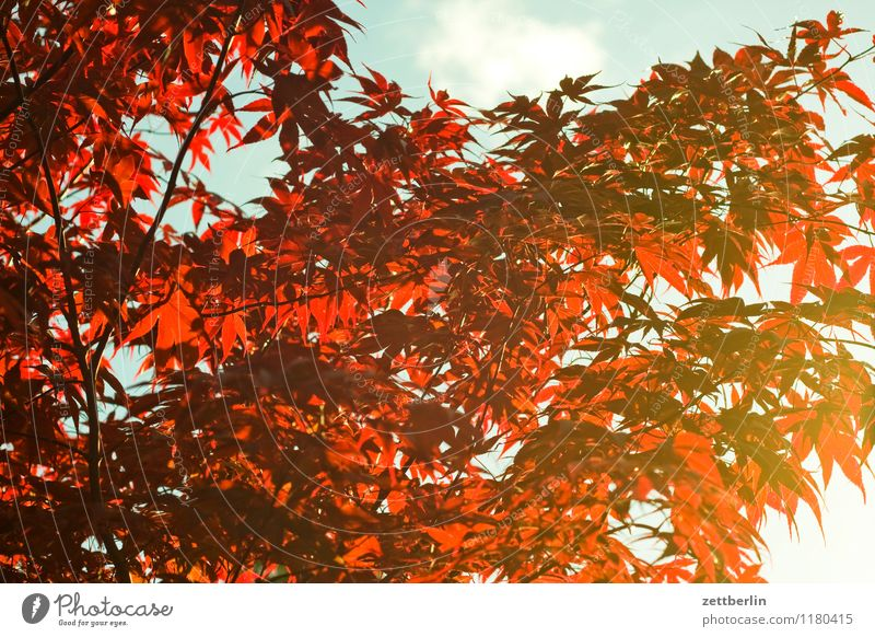 red leaves Spring Garden Nature Plant Garden plot Growth Tree Bushes Branch Twig Leaf Sun Evening sun Background picture Structures and shapes Pattern