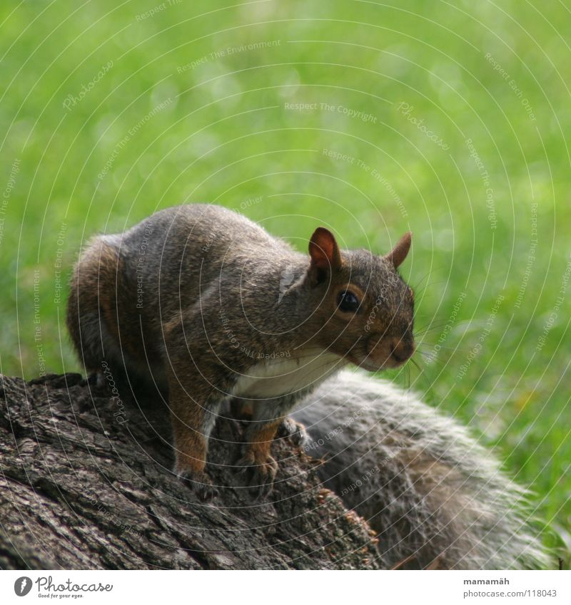 Favourite animal: squirrel! Part 3 Squirrel Paw Bushy Sweet Small Cute Tree Meadow Grass Toronto Park Speed Brown Pelt Rodent Mammal Be confident Brash Ear Nose