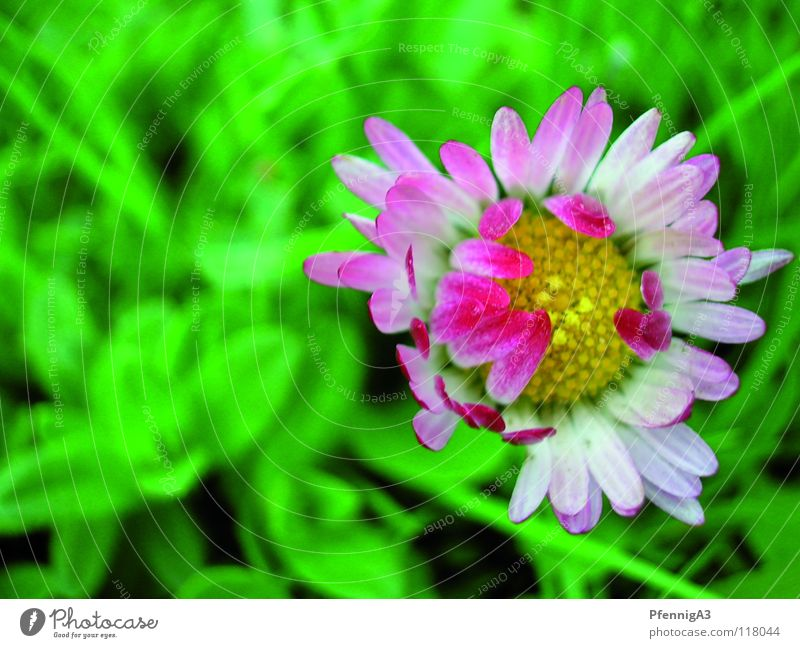 Nature Flower Blossoming Daisy Extra