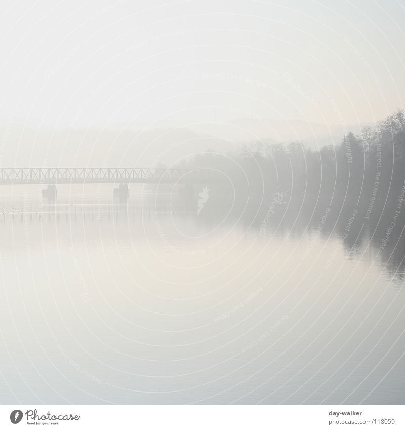 silence Lake Calm Relaxation Fog Morning Wake up Forest Tree Reflection Surface Bird Column Pedestrian crossing Panorama (View) Water Coast Mountain Nature