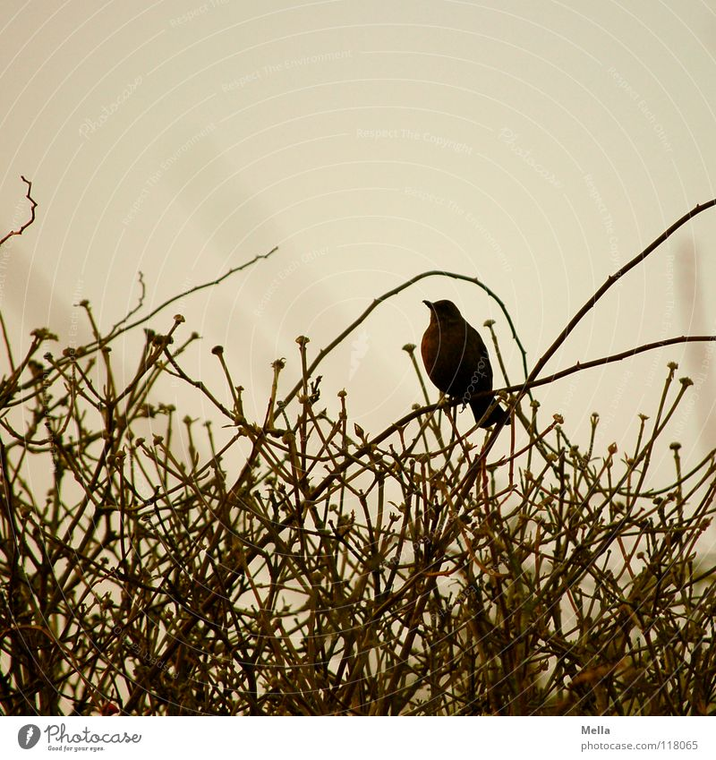 Winter Loneliness Cold Gray Brown Bird Sit Empty Gloomy Communicate Bushes Branch Under Twig Sing Arch