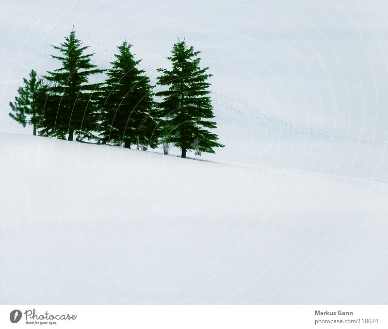 Green White Tree Winter Cold Mountain Snow Ice Multiple Coniferous trees Fir tree Slope