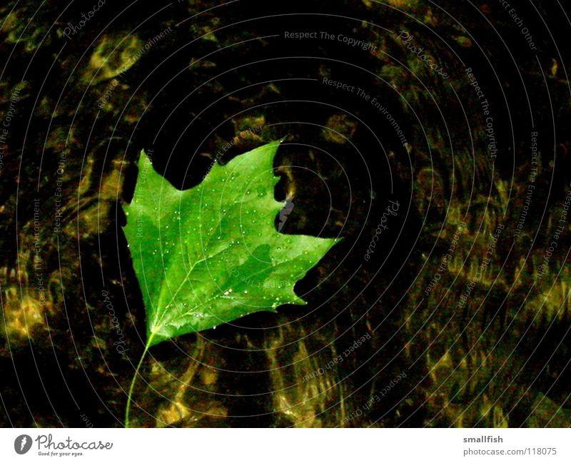Water Green Calm Leaf Autumn Wet Fluid