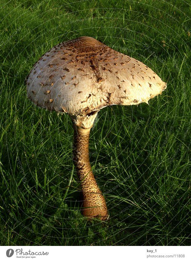 Plant Meadow Near Hat Mushroom