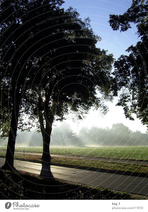 Tree Fog