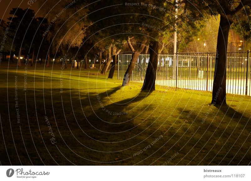 Safa Park 001 Dubai Night Tree Fence Sporting grounds Floodlight Playing grass Lawn Shadow Basketball