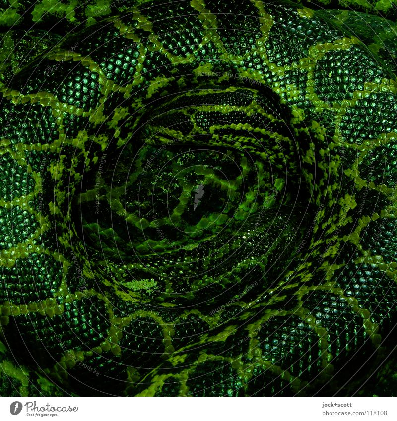 Green Relaxation Animal Dark Lie Dangerous Threat Round Snake Might Protection Strong Watchfulness Brazil Long Safety (feeling of)