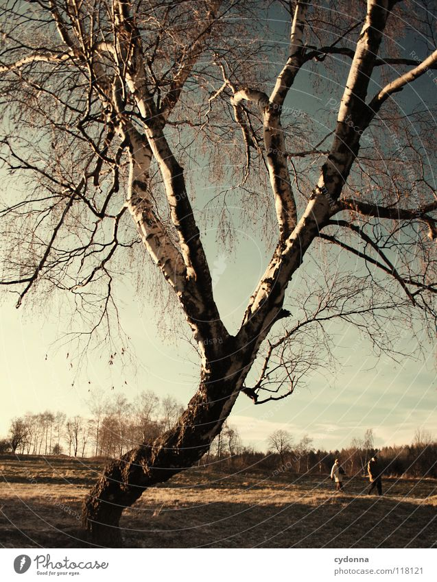 Human being Sky Nature Old Blue Beautiful Tree Winter Joy Loneliness Calm Far-off places Landscape Life Meadow Cold