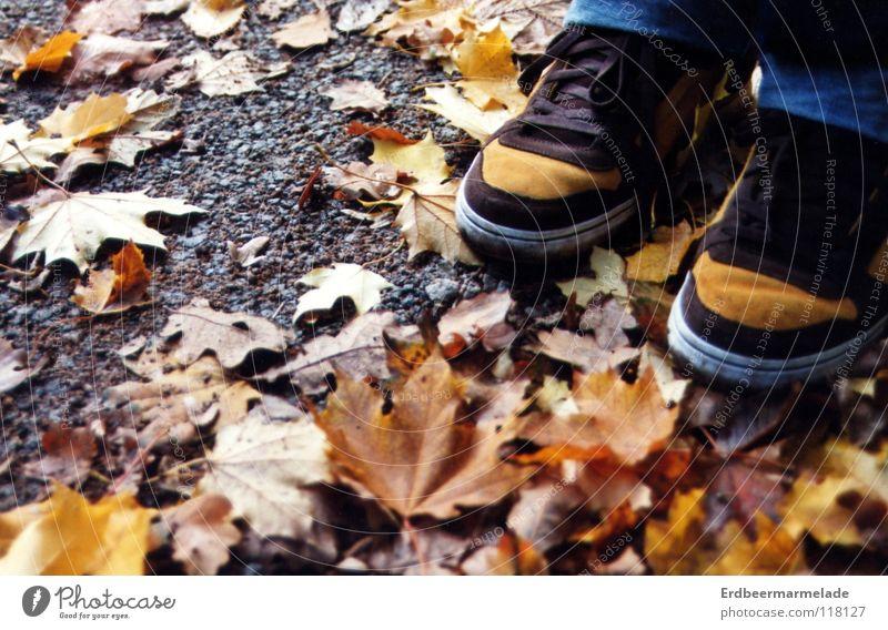 Leaf Calm Autumn Footwear