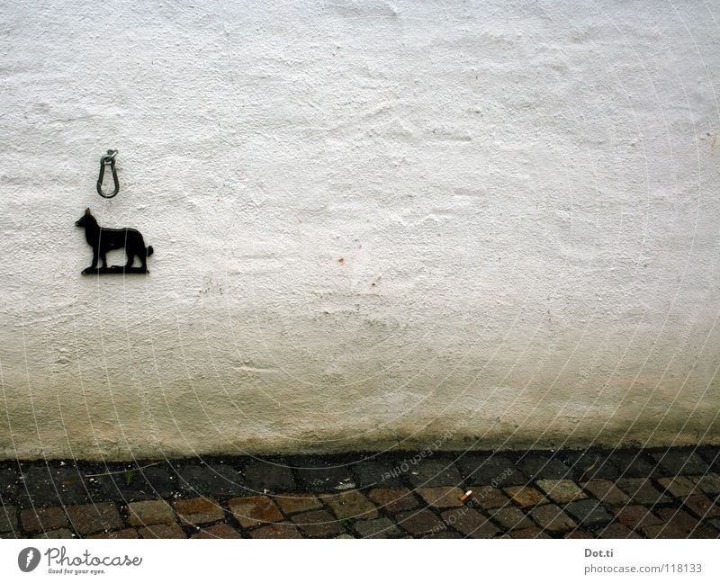 White Black Wall (building) Dog Wall (barrier) Facade Empty Gloomy Derelict Sign Signage Symbols and metaphors Animalistic Cobblestones Pet Plaster
