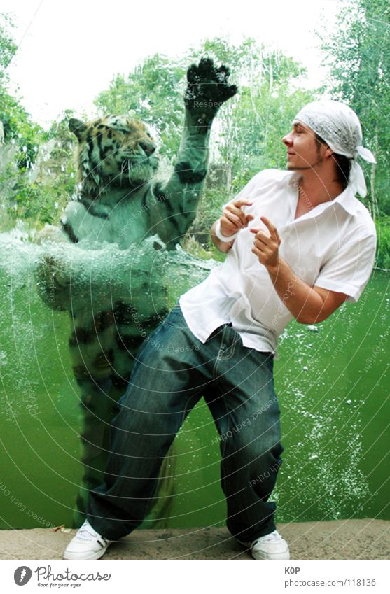 tiger dance Tiger Encounter Together Surprise Zoo Strange Joy K0P LD Animal. zoo Movement Dance Water