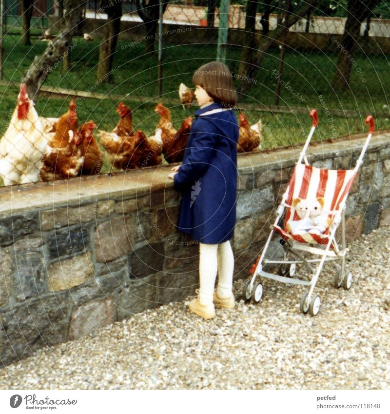 Child Vacation & Travel Girl Animal Small Childhood memory To go for a walk Observe Curiosity Toddler Farm Historic Fence Barn fowl Seventies Cattle breeding