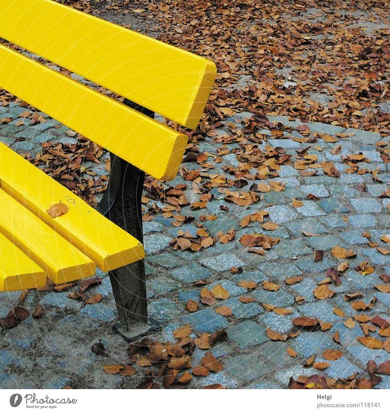 Part of a yellow bench on cobblestone pavement with autumn leaves Autumn Park Park bench Pave Leaf To fall Stand Loneliness Together Side by side Gray Black
