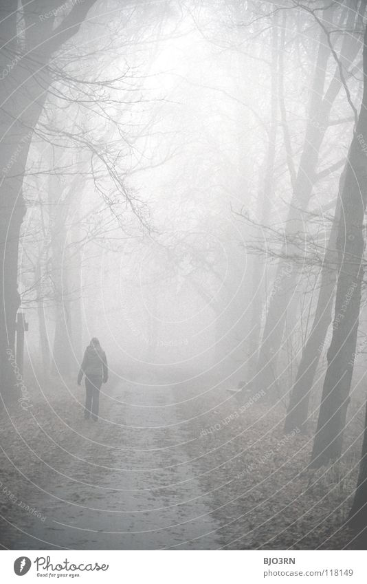 Woman Human being Nature Tree Winter Loneliness Forest Dark Cold Sadness Going Fog Wet Frost Mysterious Frozen