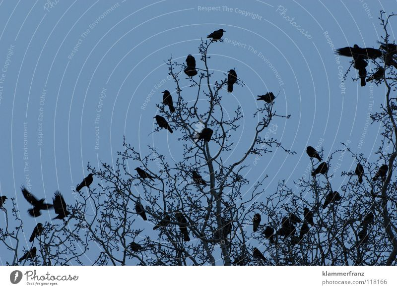 Sky White Tree Leaf Winter Clouds Black Cold Gray Bird Park Bushes Round Branch Image Frozen