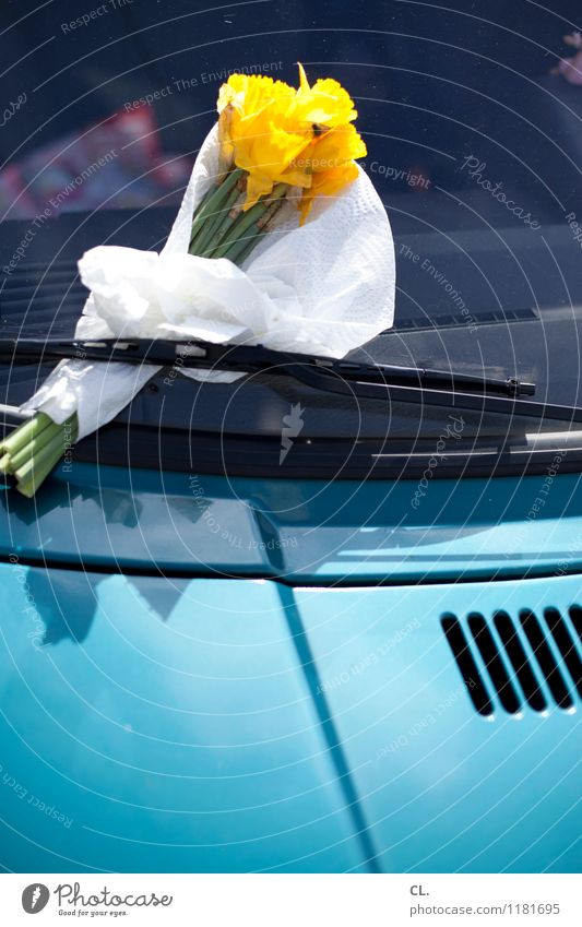 floral greeting Flower Blossom Transport Means of transport Motoring Car Windscreen wiper Car Window Gift Salutation Blossoming Blue Yellow Sympathy