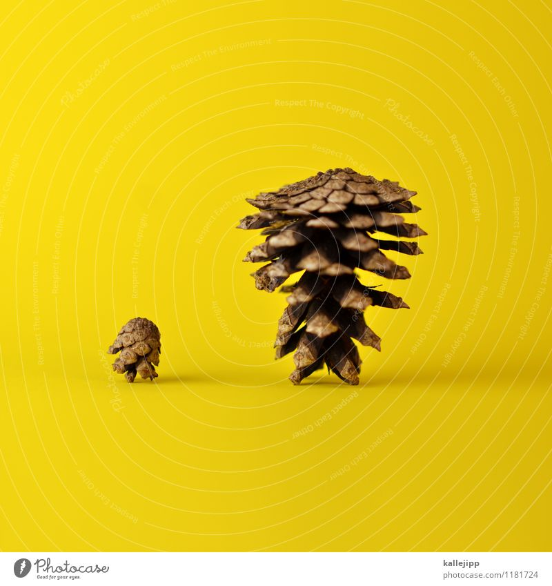 father & son Environment Nature Plant Old Fat Thin Large Small Brown Yellow Cone Stand Father's Day Adults Child Parents Son Card Colour photo Multicoloured
