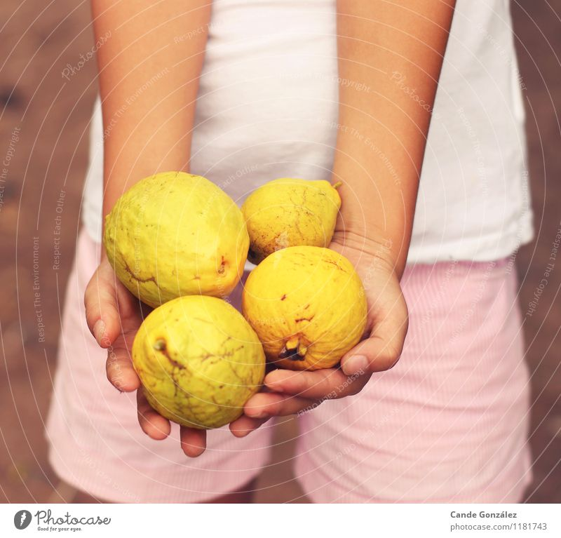 # 1181743 Fruit Lifestyle Girl Hand Human being 8 - 13 years Child Infancy Yellow Colour photo Exterior shot Neutral Background Evening