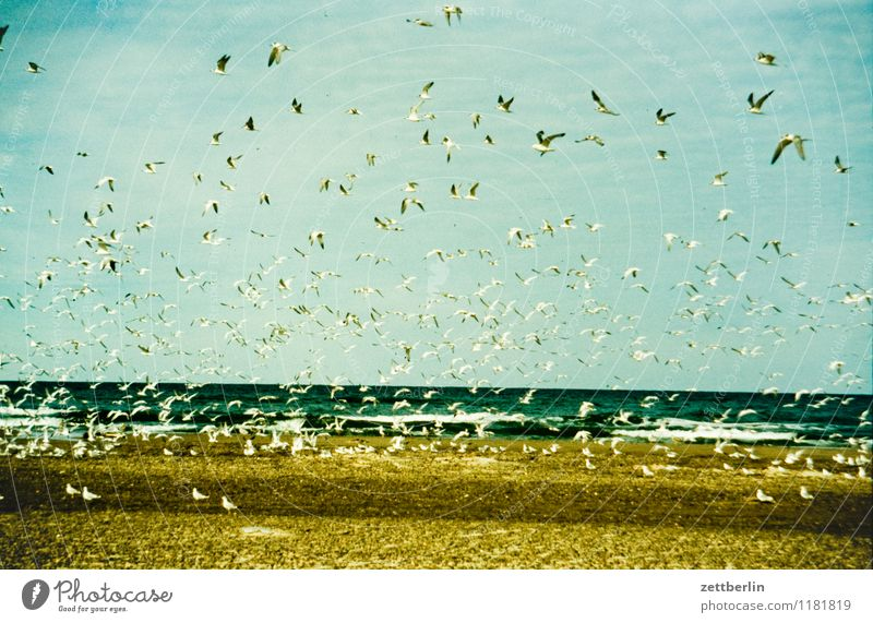 Sky Vacation & Travel Summer Sun Ocean Landscape Clouds Far-off places Beach Travel photography Coast Flying Sand Horizon Waves Copy Space