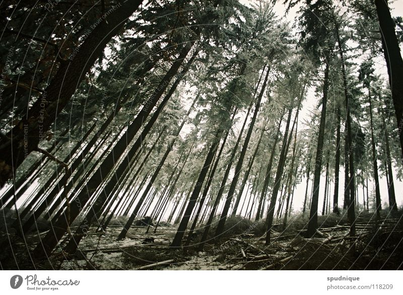 Tree Winter Forest Cold Snow Wood Fear Perspective Closed Panic Woodground Hoar frost Coniferous forest Spruce Undergrowth Winter forest
