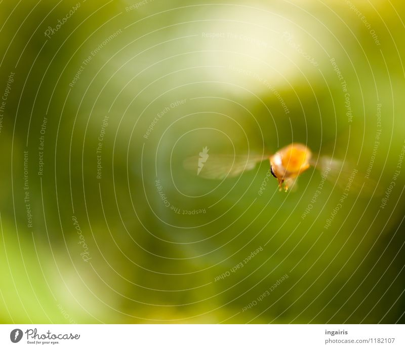 fly away Nature Garden Animal Fly Insect Hover fly Running Movement Flying Esthetic Natural Speed Green Orange White Moody Colour photo Exterior shot Close-up