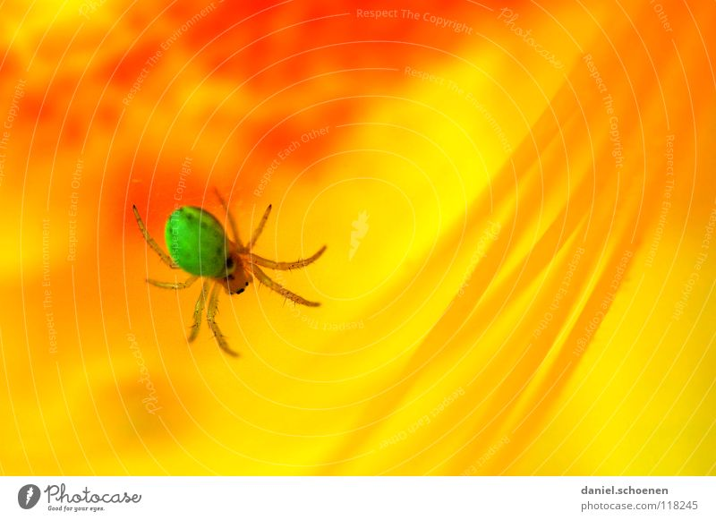 Spiderman Rhododendrom Abstract Flower Blossom Spring Summer Green Yellow Red Multicoloured Dangerous Poison Macro (Extreme close-up) Close-up Detail Orange