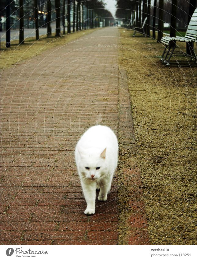 Cat White Tree Animal Lanes & trails Sand Horizon Perspective Bench Pelt Trust Sidewalk Traffic infrastructure Pet Mammal Avenue