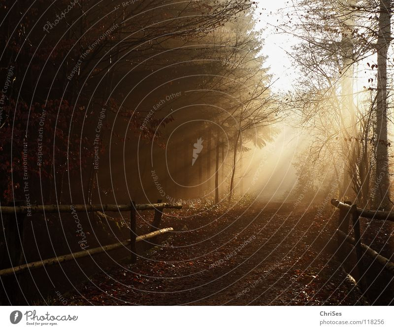 Bridge to light Fog Morning Sunrise Winter Autumn Bad weather Damp Wet Cold Radiation Physics Cute Leaf Black Brown Tree Tunnel Romance Summer Northern Forest