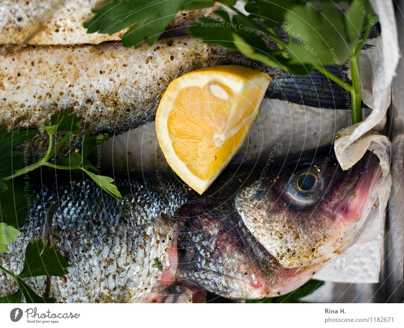 FreshFish II Herbs and spices Lemon Nutrition Authentic Delicious To enjoy BBQ season Preparation Raw Colour photo Deserted Shallow depth of field