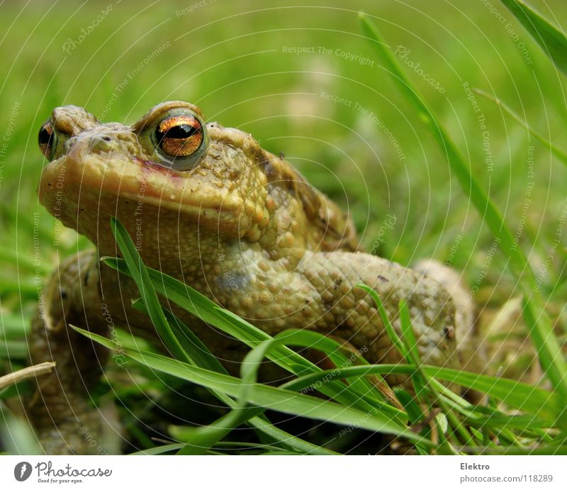 Hand Eyes Animal Meadow Jump Grass Spring Brown Field Hiking Kissing Catch Hunting Frog Disgust Captured