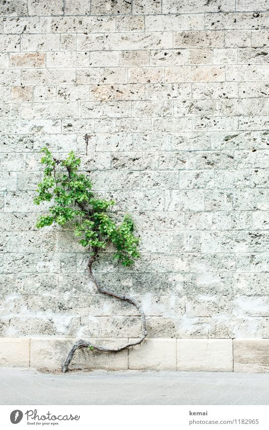 Plant Green Tree Leaf Wall (building) Wall (barrier) Exceptional Stone Bright Growth Tree trunk Curve Strange Exit route Stone wall