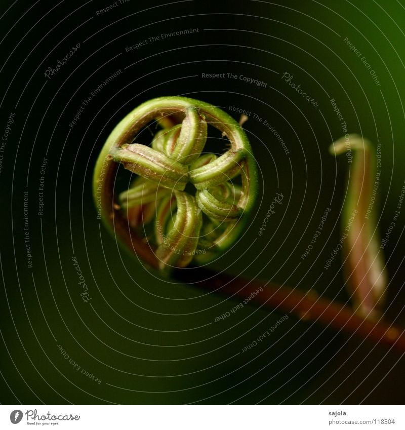 curled Nature Plant Fern Esthetic Round Brown Green Beginning Sustainability Coil Wheel Taoism Connectedness Spokes Consistent Colour photo Subdued colour
