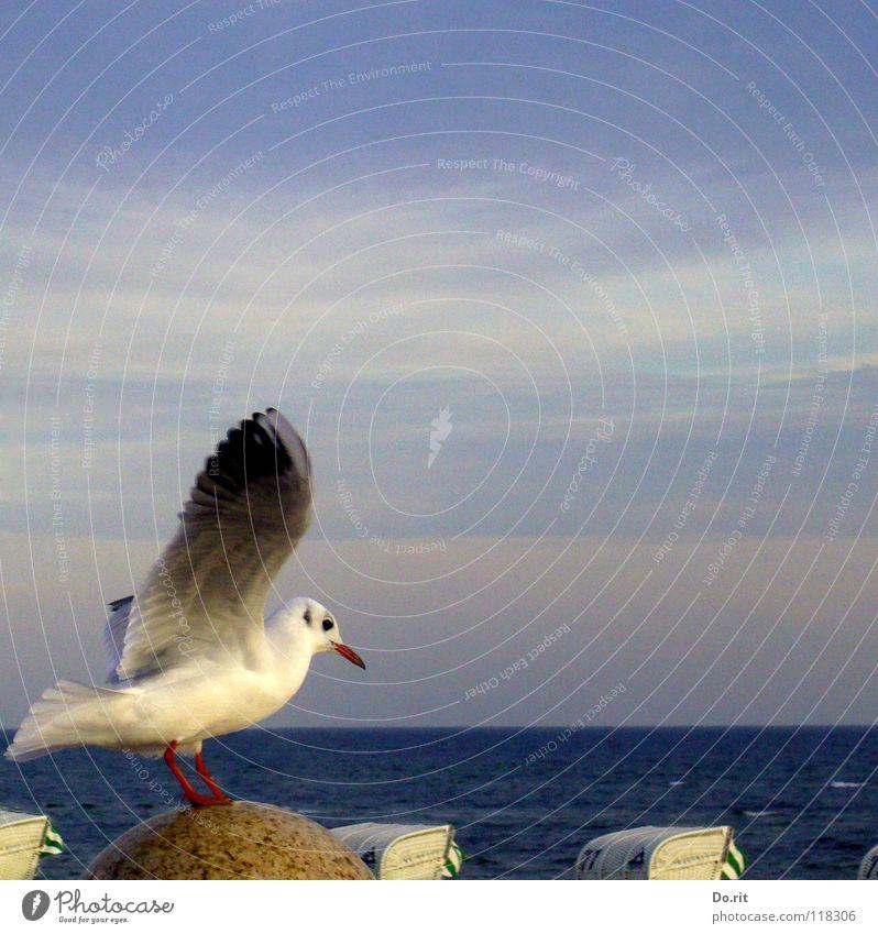 A seagull doesn't make a summer... Seagull Autumn Beach chair Band of cloud White Beak Ocean Coast Peace Bird Wing Sky approach Sit Blue Baltic Sea Stone