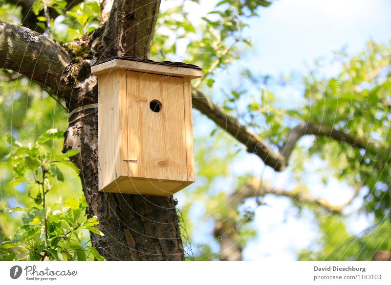 URGENT new tenant wanted!!! Flat (apartment) Dream house Garden Moving (to change residence) Nature Landscape Plant Animal Sky Spring Summer Beautiful weather