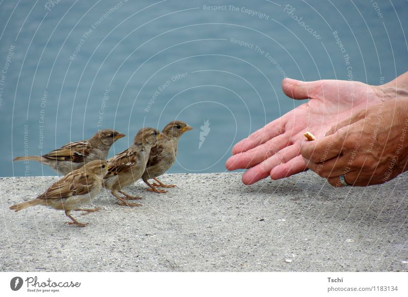 One after the other Hand Fingers Water Animal Bird 4 To feed Feeding Curiosity Blue Brown Gray Love of animals Nature Animals Feeding sparrows Be confident