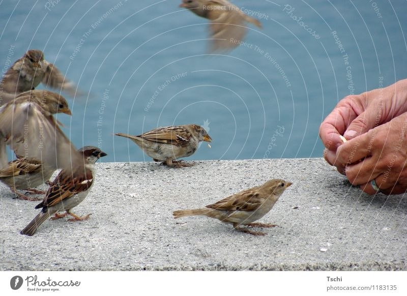 Who gets the crumbs? Hand Fingers Water Lakeside Animal Bird Group of animals Flying To feed Feeding Brash Free Curiosity Blue Brown Gray Love of animals