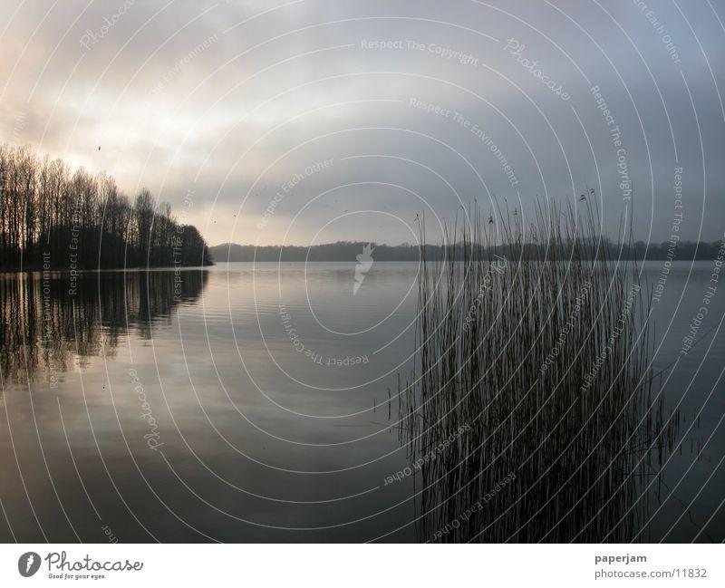 Water Lake Fog Common Reed Evening sun